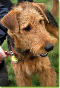 Airedale Terrier Club of Canada (ATCC) - Breeder Referrals
